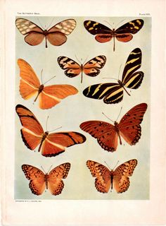 Vintage Ephemera   Plush Possum Studio: Free Butterfly Ephemera