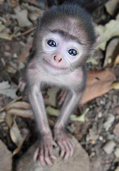Ik ben een aapje