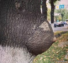 Funny Pictures of Nature to see Amazing, Crazy, Weird and Funny Nature Weird Trees, Tgif Funny, Dame Nature, Amazing Nature Photos, Unique Trees, Bizarre, Tree Sculpture, Nature Tree, Tree Art