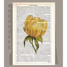 Yellow TULIP Artwork on a page from vintage Dictionary -Upcycled Book Print