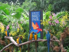 singapore jurong bird park - awesome place!