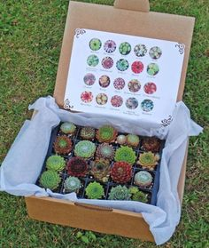 Instead of gifting a box of chocolates, gift a box of succulents