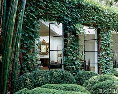 Ivy sided modern home