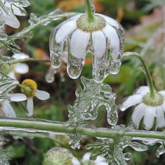 Find images and videos about nature, flowers and ice on We Heart It - the app to get lost in what you love. Unusual Things, Winter Wonder, Belle Photo, Amazing Nature, Beautiful World, Houseplants, Mother Nature, Beautiful Flowers, Nature Photography