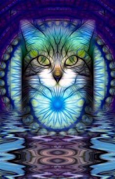 Cat fractal