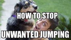 dog training - YouTube