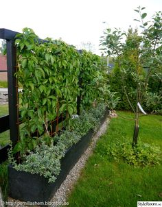 garden canes near me Garden Shrubs, Garden Trellis, Garden Landscaping, Back Gardens, Outdoor Gardens, Vertikal Garden, Side Garden, Greenhouse Gardening, Backyard Fences