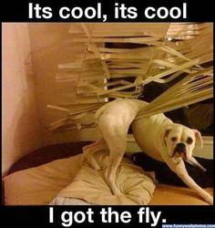 I Got The Fly!