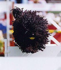 These  puli  dogs just make me smile