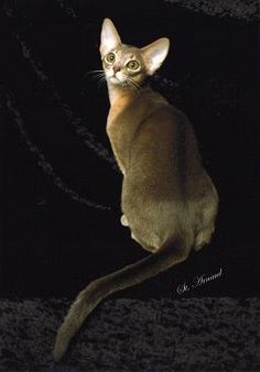Home - Red Ferne Abyssinians