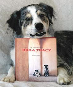 Bro and Tracy Animal Welfare, Inc. is a nonprofit 501(c)(3) organization. Our goals are to help individual animals connect with the right people, help other nonprofit rescue organizations in their mission, and provide education that will result in more successful adoptions. Located in New Mexico.
