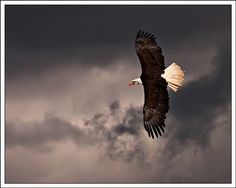 Eagles fly over the storms....