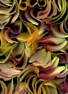 larameeee: Petals