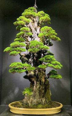 33 Awesome Bonsai Plant Design Ideas For Garden. If you are looking for Bonsai Plant Design Ideas For Garden, You come to the right place. Below are the Bonsai Plant Design Ideas For Garden. Amazing Gardens, Plants, Mini Garden, Bonzai Tree, Zen Garden, Plant Design, Japanese Garden, Flowering Bonsai Tree, Miniature Trees
