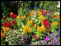Flower Garden Perennial Plant ** Click on the image for additional details.
