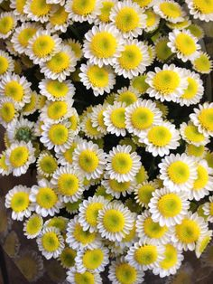 Santini 'Sun Up'. Sold in bunches of 25 stems from the Flowermonger the wholesale floral home delivery service. Diy Wedding Yellow, Yellow Wedding Flowers, Yellow Flowers, Cool Plants, Stems, Fresh Flowers, Indoor Plants, Fairytale, Greenery