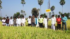 Nuziveedu Seeds pro-actively participates in the Seed Subsidy Programs initiated by the State and Central Governments.