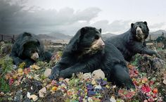 I never knew bears could drape themselves with such grace, or garbage look so beautiful. Photographic art by Simen Johan
