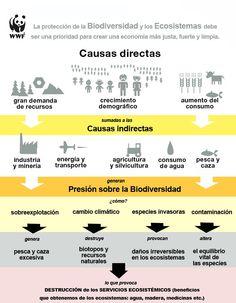 Causas directas e indirectas que afectan la biodiversidad y los ecosistemas. #ecologia #eco