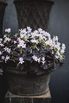 zetas trädgård - Google-haku Container Plants, Container Gardening, Flower Containers, Outdoor Plants, Outdoor Gardens, Pot Jardin, Pot Plante, Farmhouse Garden, Nature Plants