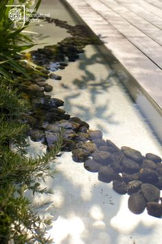 Vestra Wealth's Jardin du Gourmet Garden, a great use of water and natural materials Gourmet Garden, Roof Gardens, Pond Life, Water Features In The Garden, Enchanted Garden, Flower Show, Water Garden, Ponds, Amazing Flowers