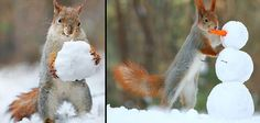 Pictures of the day: Could this be the most skilful red squirrel?