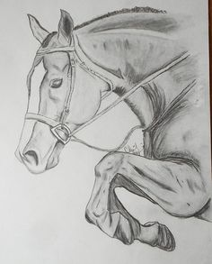 """Best 11 pencil sketch """"Hunter"""" by C. Lemieux prints now available! Cool Art Drawings, Horse Drawings, Pencil Art Drawings, Art Drawings Sketches, Animal Drawings, Drawing Art, Horse Pencil Drawing, Horse Sketch, Animal Sketches"""