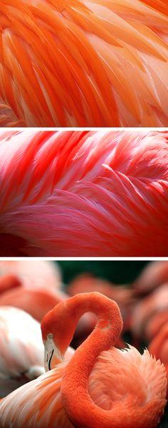 flamingo....<>LOVELOVELOVE the PINKy****
