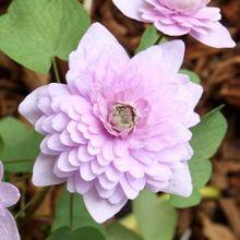 wildflowers of nova scotia new brunswick amp prince edward island the photgraphs of mary primrose