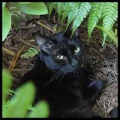 How to keep Cats our of your Flower Beds.