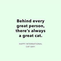 MEOW!! Happy International Cat day!!!  // Detrás de cada gran persona hay siempre un gran gato! Feliz día a todas las cositas peludas que nos llenan de alegría y amor infinito!! #toystyle #internationalcatday #lovecats #toywords