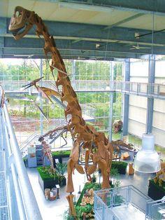 Réplique, De Groene Poort, Boxtel. Dinosauria, Saurischia, Sauropodomorpha, Sauropoda, Macronaria, Brachiosauridae. Auteur : Ghedo, 2011.