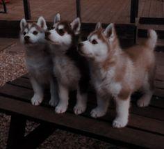 Super Cute Animals, Cute Little Animals, Cute Funny Animals, Cute Puppies, Cute Dogs, Dogs And Puppies, Happy Animals, Animals And Pets, Animal Wallpaper