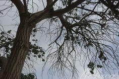 Ungreen tree by Monica Ojha   GuruShots