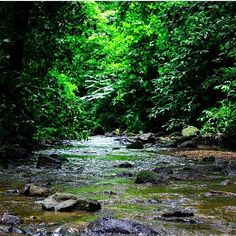You can almost feel the wild air.  Meditating on this #peaceful stream in Carara National Park via @juancazugo! #CostaRicaExperts #CostaRica