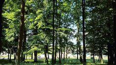 #photo #photography #lumia640 #lumiaphotography #lumialove #nature #naturephotography #naturepics #naturelovers #snartphonephotography #smartphoneart #orastie #romania