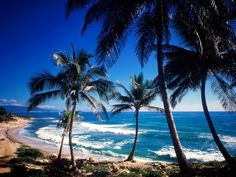 Beaches Pictures - Coast of Paraiso, Dominican Republic - Beaches Wallpapers Strand Wallpaper, Beach Wallpaper, Tree Wallpaper, Oh The Places You'll Go, Places To Travel, Places To Visit, Dream Vacations, Vacation Spots, Vacation Club
