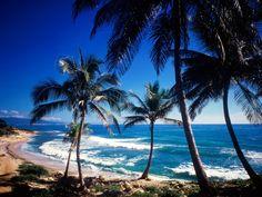 Plage paradisiaque en République Dominicaine #croisière #croisierenet.com #paysage #caraïbes #voyage #croisièrecaraïbes