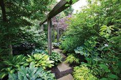 Beautiful shade garden