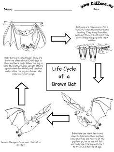 Bat Activity Sheets - Lifecycle of a Brown Bat