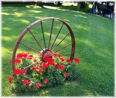 Wagon wheel with Geraniums, so pretty. #CountryLandscaping