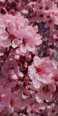 Piones Flowers, Peach Flowers, Peach Blossoms, Colorful Flowers, Aesthetic Backgrounds, Aesthetic Wallpapers, Flower Wallpaper, Iphone Wallpaper, Classy Wallpaper