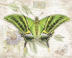 Lang - June 2016 Wallpaper | Butterflies
