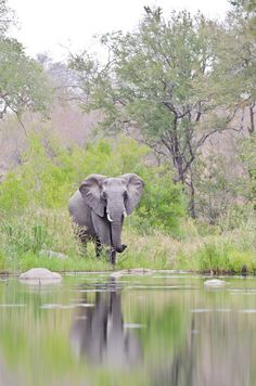 Sabi Sabi Private Game Reserve, South Africa