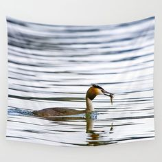 Great crested grebe and its catch Wall Tapestry by Tapuphoto (Tapani Teittinen) Wall Tapestry, Nature Photography, Home Decor, Decoration Home, Room Decor, Nature Pictures, Wildlife Photography, Home Interior Design, Home Decoration