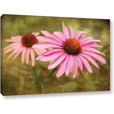 Antonio Raggio 'Flowers In Focus V' Gallery-Wrapped Canvas, Size: 24 x 36, Green