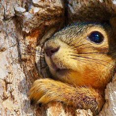 sweet squirrel... Animals Of The World, Animals And Pets, Baby Animals, Funny Animals, Cute Animals, Wild Animals, Woodland Creatures, Cute Creatures, Beautiful Creatures