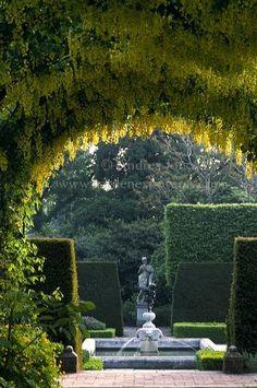 Laburnum x waterii walkway in the Queen's Garden at Royal Botanical Garden Kew.  Andrea Jones