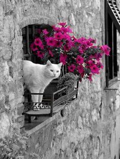 Un peu de couleurs ; Marre de la vie en noir et blanc !