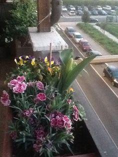 Il mio balcone